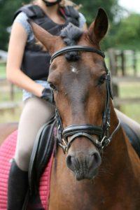 ponykamp2015