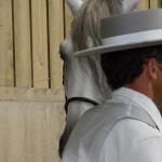 Bezoek onze ruitershop, alles voor het Spaanse paard